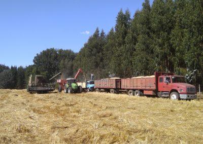 AgricolaMonteverde_004
