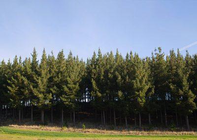 Forestal Monteverde S.A. 04