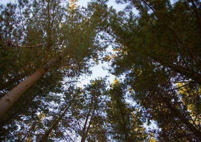 Forestal Monteverde S.A.  05