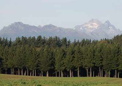 Forestal Monteverde S.A 01