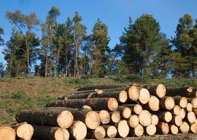 Forestal Monteverde S.A. 07